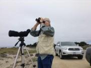 Rick Hanks monitoring a black oystercatcher pair