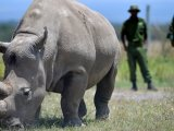 endangered-animals-in-africa