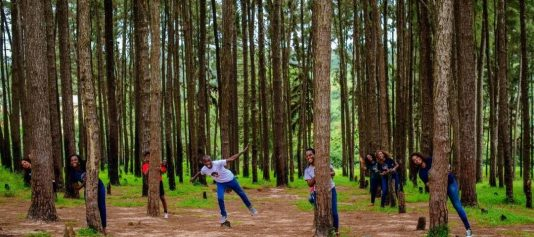 ngwa-pine-forest-historical-tourist-sites-in-nigeria
