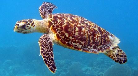sea-turtles-endangered-marine-animals