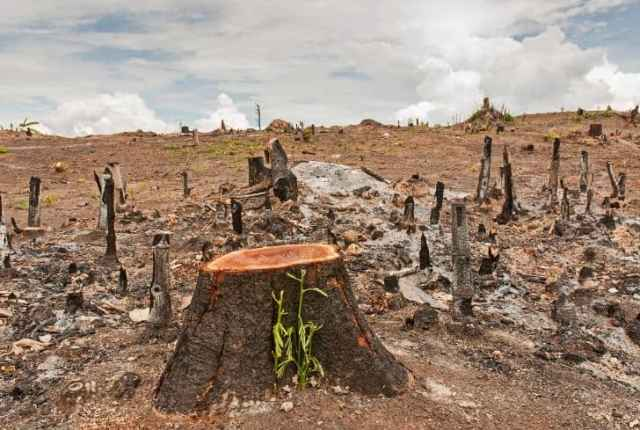 Top 13 Effects of Deforestation on Humans