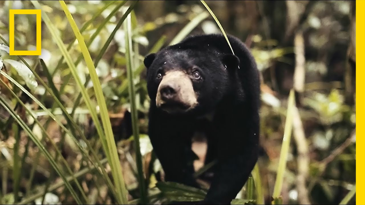 See Why This Little Sun Bear's World Is A Scary Place   Short Film Showcase