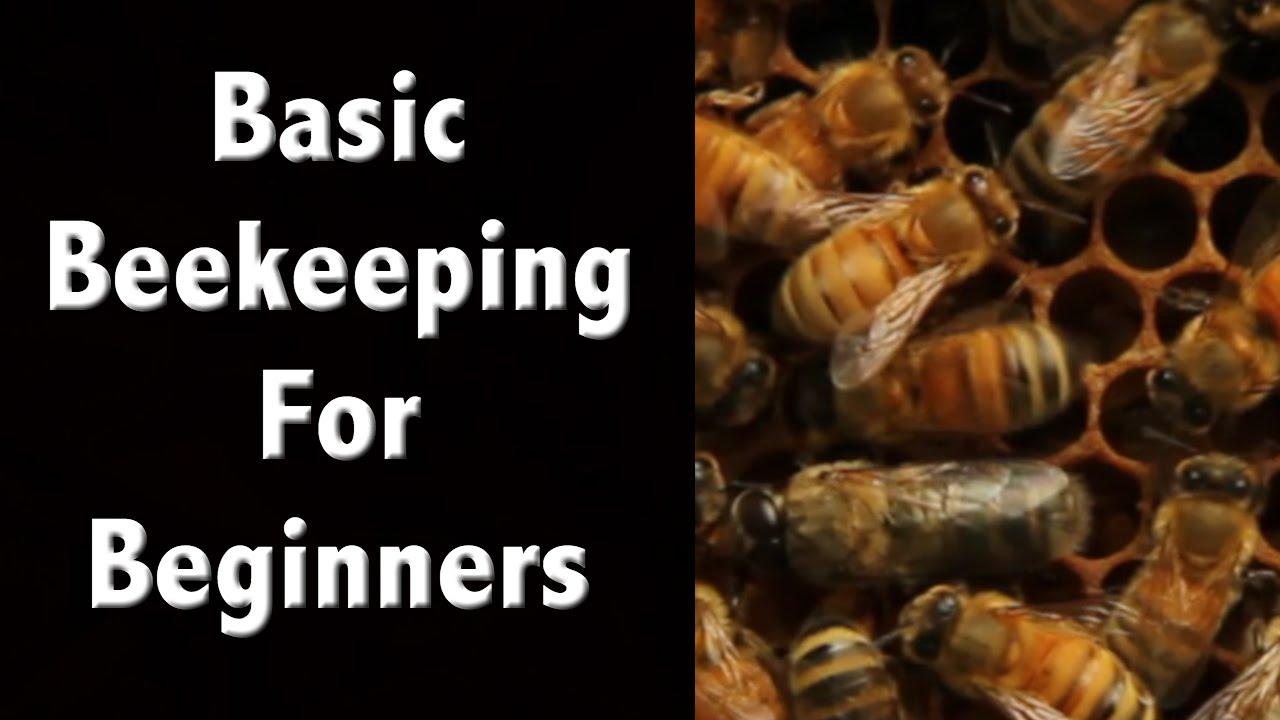 Beekeeping For Beginners And Beekeeping Basics – Off Grid Living