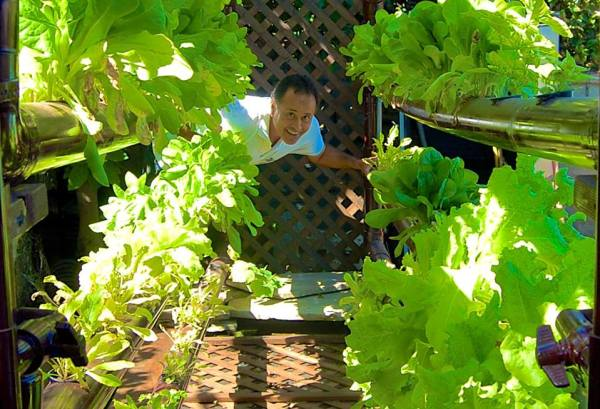 Organic lettuce from seed to salad in only 30 days! — in Redondo Beach, CA.