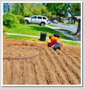 Subsurface Drip Irrigation installed by EnviroscapeLA
