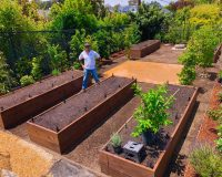 Urban Food Forests