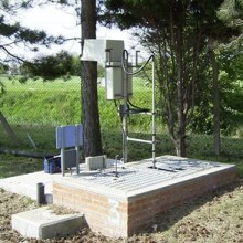 In situ ammonia monitoring