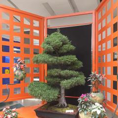 """Bonsáis. Exposición Ukiyo, """"Mundo Flotante"""""""
