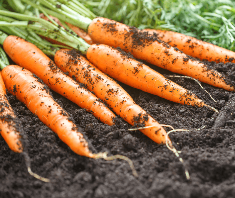 Winter Vegetables That You Can Start Planting In Georgia Now