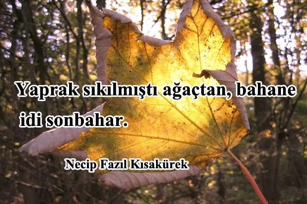 yaprak sıkılmıştı ağaçtan - Sonbahar İle İlgili Sözler - Resimli Sonbahar Sözleri, resimli-sozler, guzel-sozler