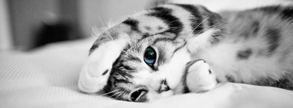 Tatlı yavru kedi - Şirin Kapak Fotoğrafları - Sevimli Ve Tatlı Kapak Resimleri, komik-sozler, guzel-sozler