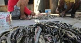 Βασανίζονται φίδια για να φτιαχτούν τσάντες