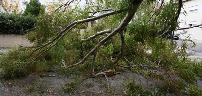 Δεκάδες κλήσεις για πτώσεις δένδρων από την κακοκαιρία – Τα προβλήματα στα Βόρεια Προάστια