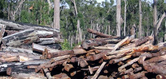 Τα μισά δένδρα στη Γη εξολοθρεύτηκαν από ανθρώπινο χέρι
