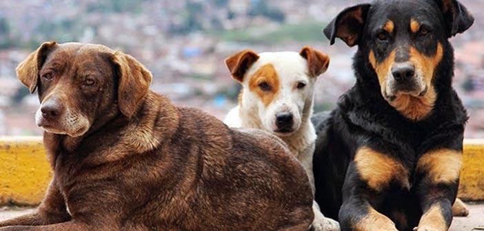 Διημερίδα ενημέρωσης και ευαισθητοποίησης για τα αδέσποτα ζώα στην Αγία Παρασκευή