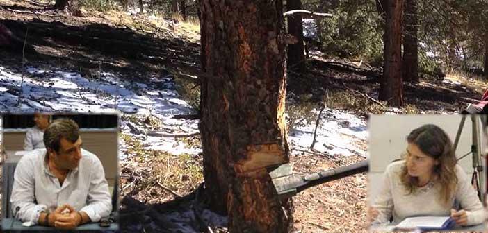 Β. Κόκκαλης: Ψεύδη & ανακρίβειες Μ. Διακολιού για την κοπή δένδρων