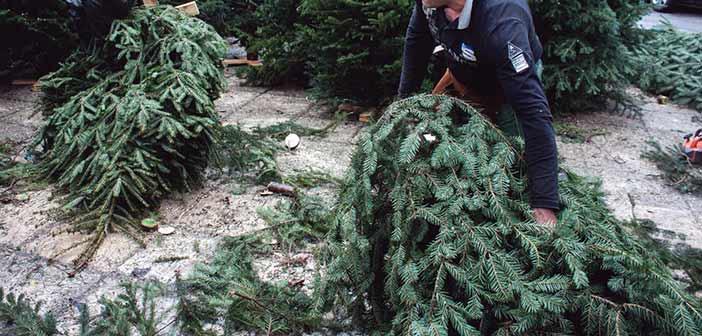 Δήμος Κηφισιάς: Κανένα χριστουγεννιάτικο δένδρο στα οικιακά απορρίμματα