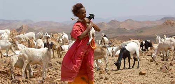 «Το λουλούδι της ερήμου» από την Κινηματογραφική Λέσχη Πεύκης