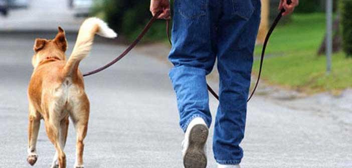Δήμος Φιλοθέης – Ψυχικού: Πρόστιμο για μη συλλογή ακαθαρσιών ζώων συντροφιάς