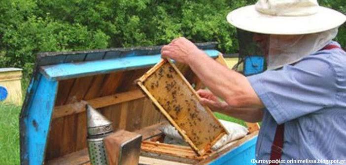 Τι θα πρέπει να προσέχουν οι μελισσοκόμοι στον Δήμο Πεντέλης