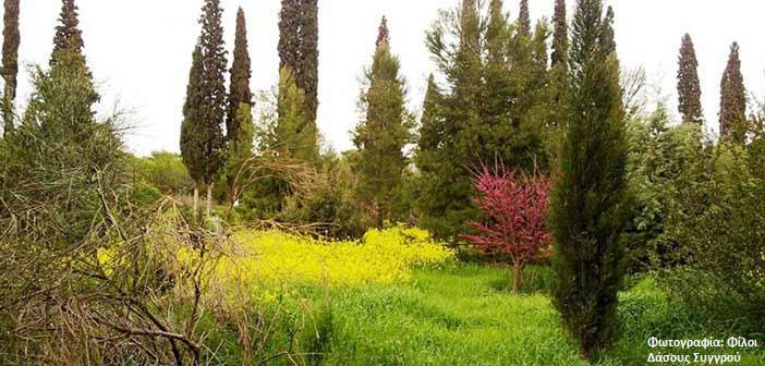 Ερώτηση ΚΚΕ προς υπ. Αγροτικής Ανάπτυξης για το δάσος Συγγρού