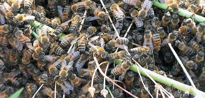 Εύβοια: Νεκρός ψαράς από τσιμπήματα μελισσών που απελευθερώθηκαν μετά από τροχαίο