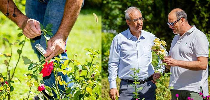 Βιολογική καταπολέμηση ασθενειών των φυτών στα πάρκα του Δήμου Κηφισιάς