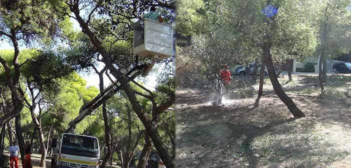 Τραγικές ελλείψεις στην αποκατάσταση των δασών Λυκόβρυσης και Πεύκης διαπιστώνει η παράταξη Δήμος Μπροστά+
