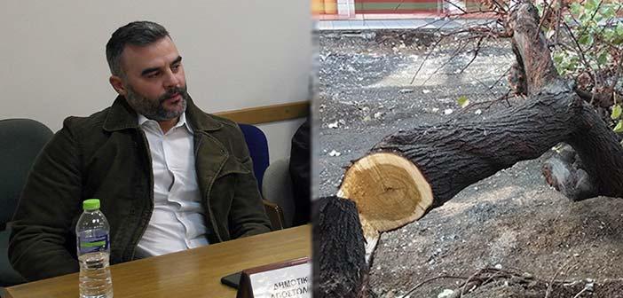 Δημήτρης Αποστολάκος: Η διοίκηση Στεργίου επιμένει στις ανεξέλεγκτες κοπές δένδρων στα Μελίσσια
