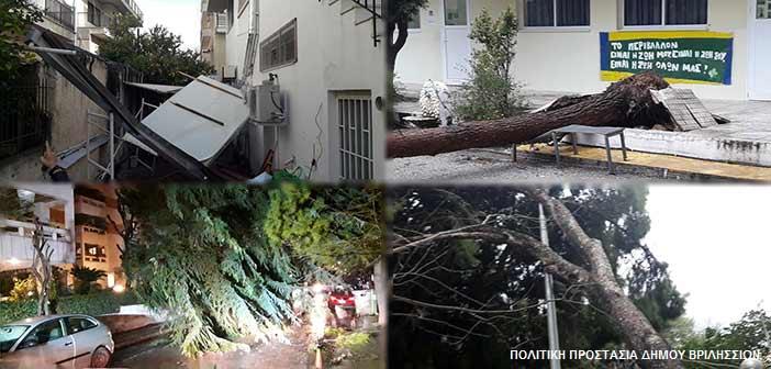 Δήμος Βριλησσίων: Λιγότερες πτώσεις δένδρων στα Βριλήσσια από κάθε άλλη φορά