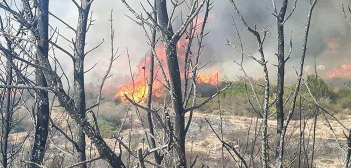 Φωτιά σε δασική έκταση στο Κρυονέρι – Ένας νεκρός
