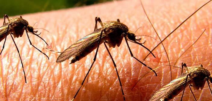 Μέτρα πρόληψης και προστασίας για την αντιμετώπιση των κουνουπιών από τον Δήμο Μεταμόρφωσης
