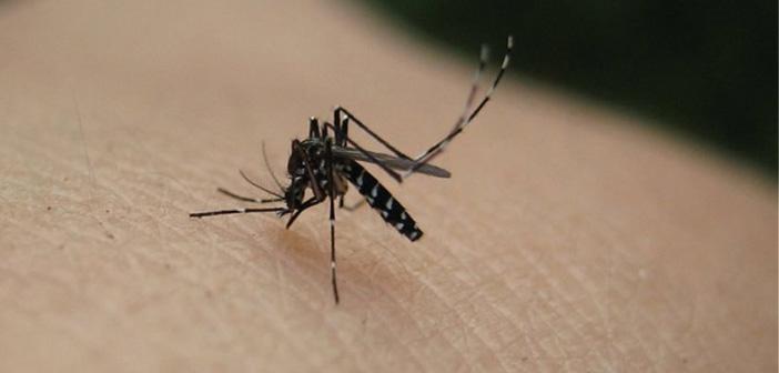 Καταγγελία δημότη για ελλιπή μέριμνα του Δήμου Πεντέλης απέναντι στον ιό του Δ. Νείλου