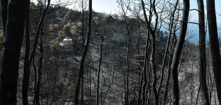 ΥΠΕΝ: Πάνω από 79 εκατ. ευρώ σε Αποκεντρωμένες Διοικήσεις και Δήμους για πρόληψη και αποκατάσταση ζημιών σε δάση