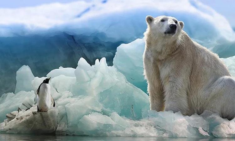 «Πεθαίνει» η Ανταρκτική: Ρεκόρ θερμοκρασίας 20,7 βαθμών – Αποκολλήθηκε παγόβουνο