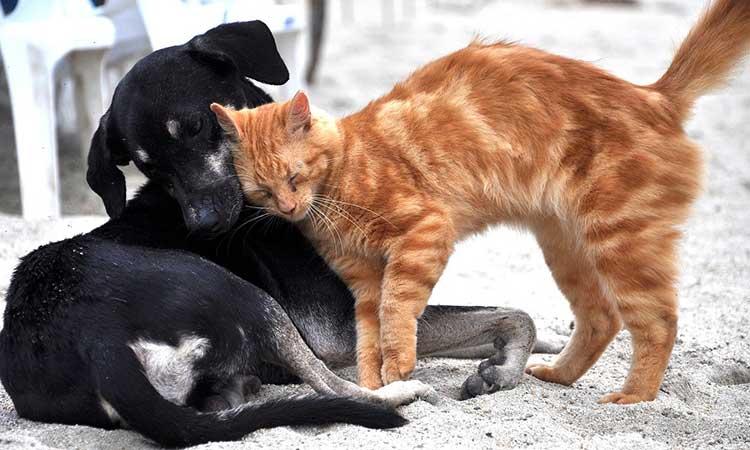 Οικολογική Συμμαχία: Πενιχρή και ανεπαρκής η νομοθεσία για την προστασία των δικαιωμάτων των ζώων