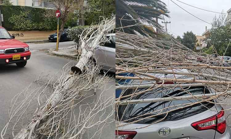 Και νέα πτώση δένδρου στα Βριλήσσια – Έπεσε πάνω σε αυτοκίνητο