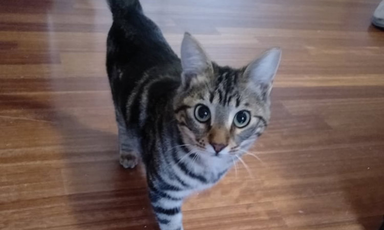 Συνεχίζονται οι υιοθεσίες γάτων μέσω του προγράμματος Διαχείρισης Αδέσποτων Ζώων Δήμου Βριλησσίων