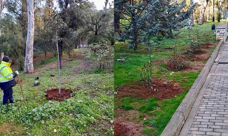 Συνεχίζονται οι εργασίες καλλωπισμού κι ενίσχυσης του πρασίνου σε Παπάγο και Χολαργό