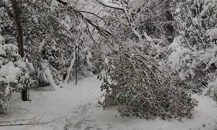 Ο Δήμος Χαλανδρίου επιχειρεί στα σημεία όπου πέφτουν δένδρα