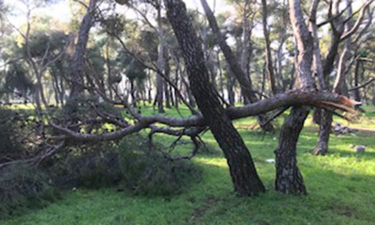 Συμμαχία Πολιτών: Να προστατεύσουμε τα δάση της Λυκόβρυσης και της Πεύκης