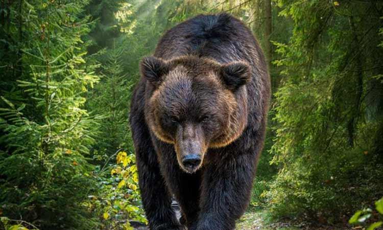 Αρκούδα σκότωσε 57χρονο στα όρη Τάτρα – Η πρώτη θανατηφόρα επίθεση εδώ και έναν αιώνα