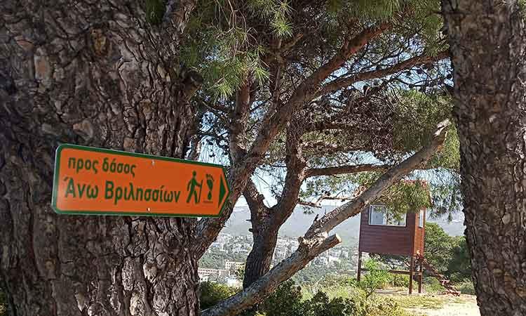 Πεζοπορία Φροντίδας του Δάσους Θεόκλητου στα Βριλήσσια