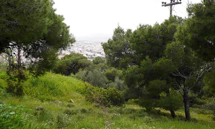 Η Δράση για μια Άλλη Πόλη κάθε Δευτέρα συμμετέχει στην πυρασφάλεια του δάσους Αγίου Θεοκλήτου Βριλησσίων