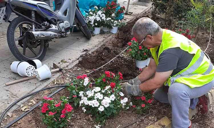 Εντατικές εργασίες καθαρισμού, αποψιλώσεων, συντήρησης πρασίνου και φυτεύσεων στο Μαρούσι