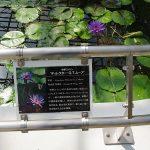 conv0001 10 150x150 - 貴布禰神社(キフネジンジャ)
