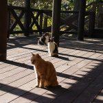 conv0002 3 150x150 - 八幡神社 清川村