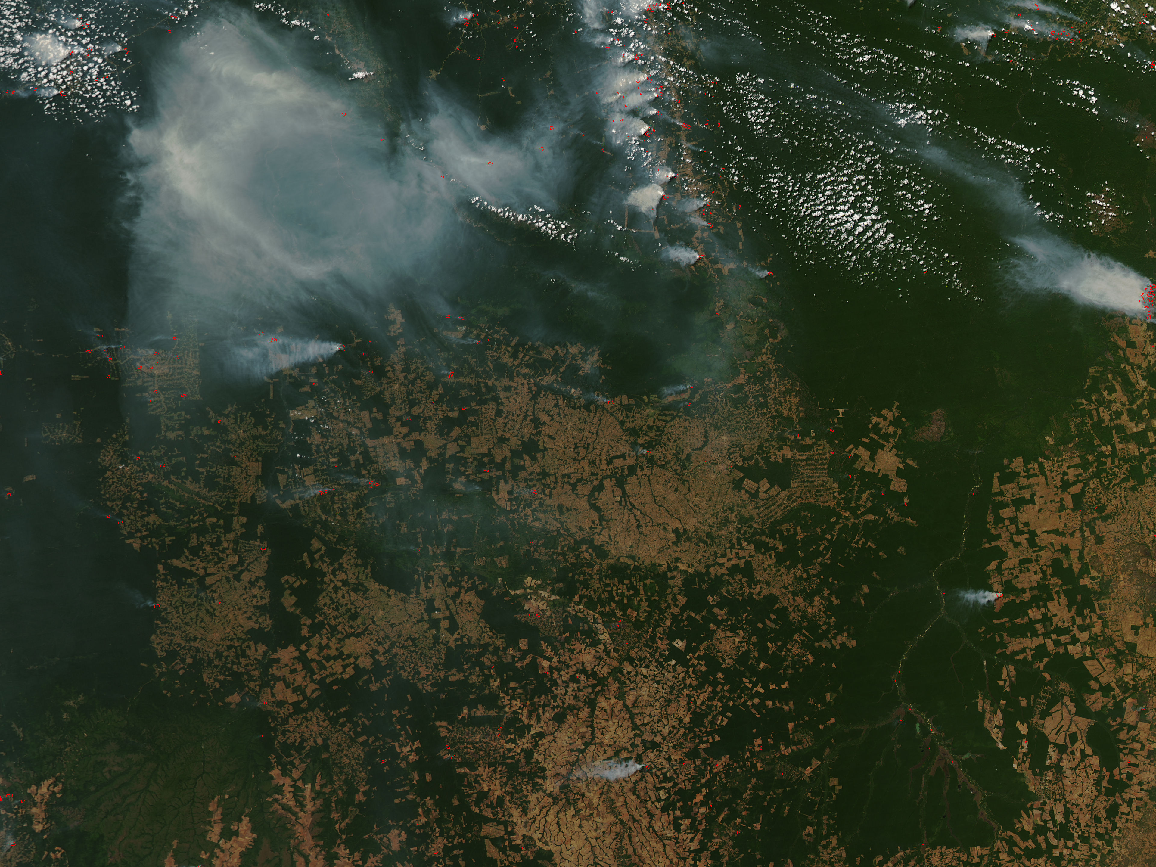 Image result for amazon burning