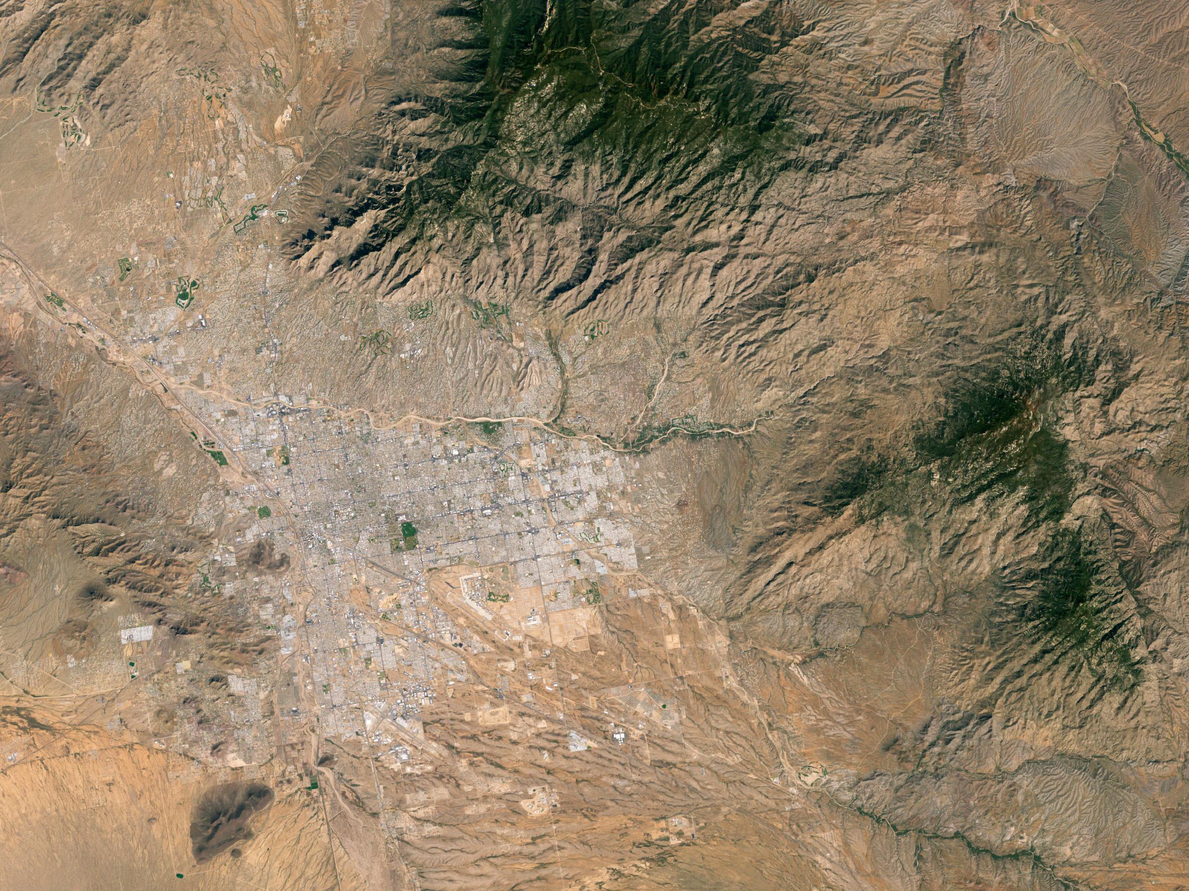 Arizona Cactus Information