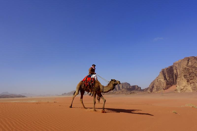Wadi Rum cammello